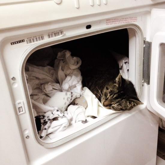 smeer uit kleding verwijderen